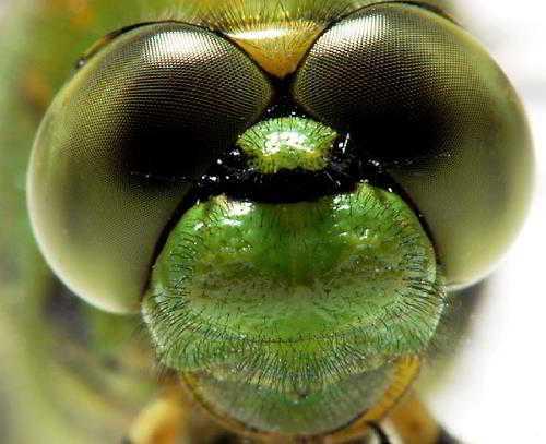 النملة من قريب اجمل صور عرب نت 5